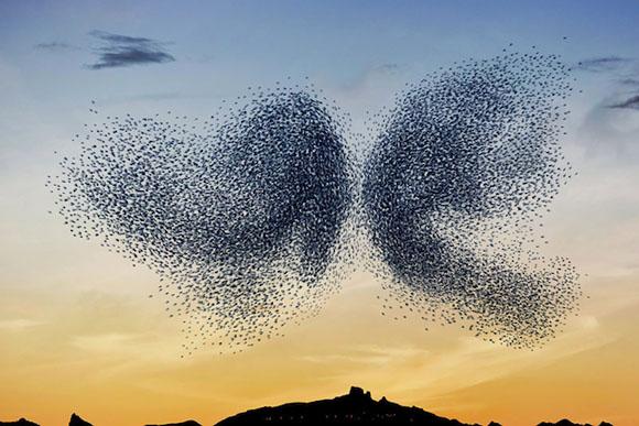 Művészsarok A-bird-ballet-feeldesain-04